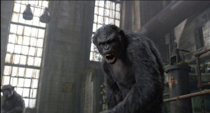 Российская касса: «Планета обезьян: Революция» стартует на уровне последнего фильма о Росомахе, собирает больше 341 млн руб.