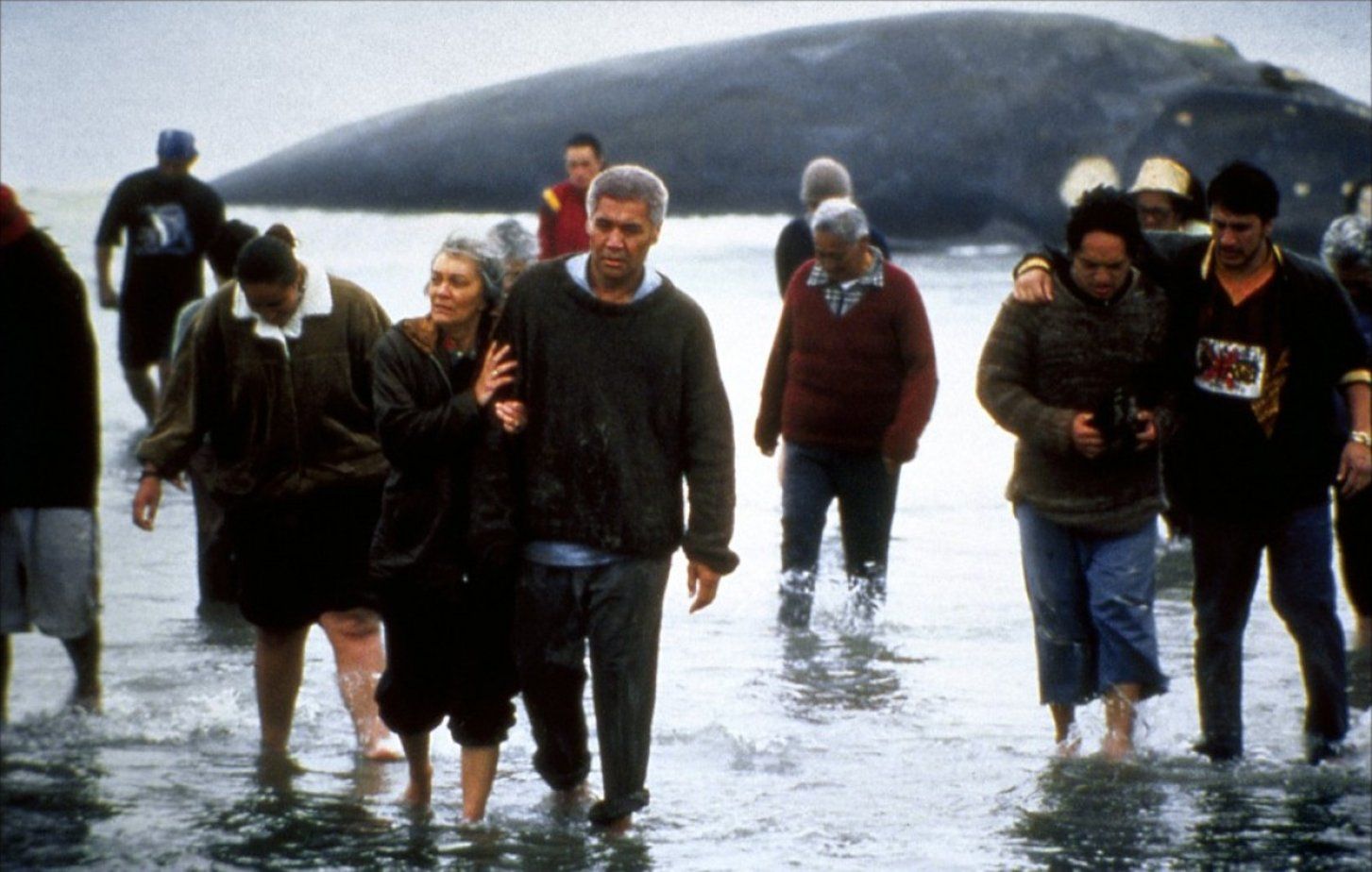 the film a whale of a ride essay Academic essay writing study tools english terms the whale rider- witi ihimaera te paikea  the bull whale is a symbol for maori language,.