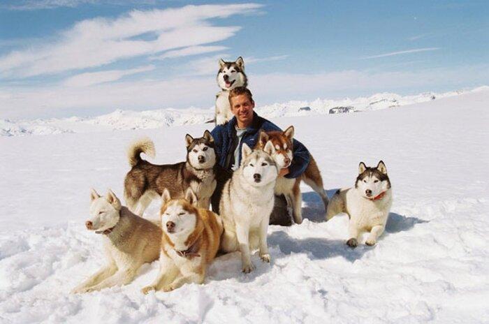 Бело кругом: яркие фильмы о полярниках
