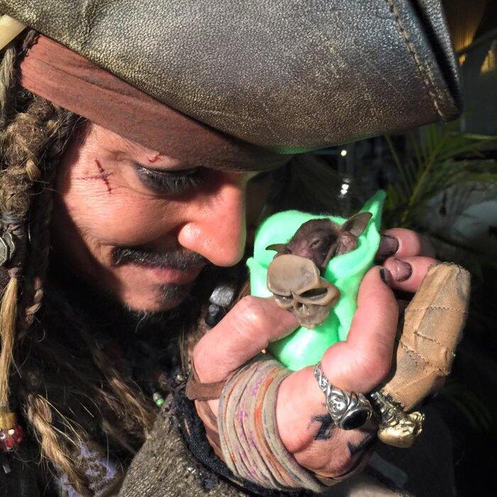 Джонни Депп в костюме Джека Воробья посетил клинику для летучих мышей