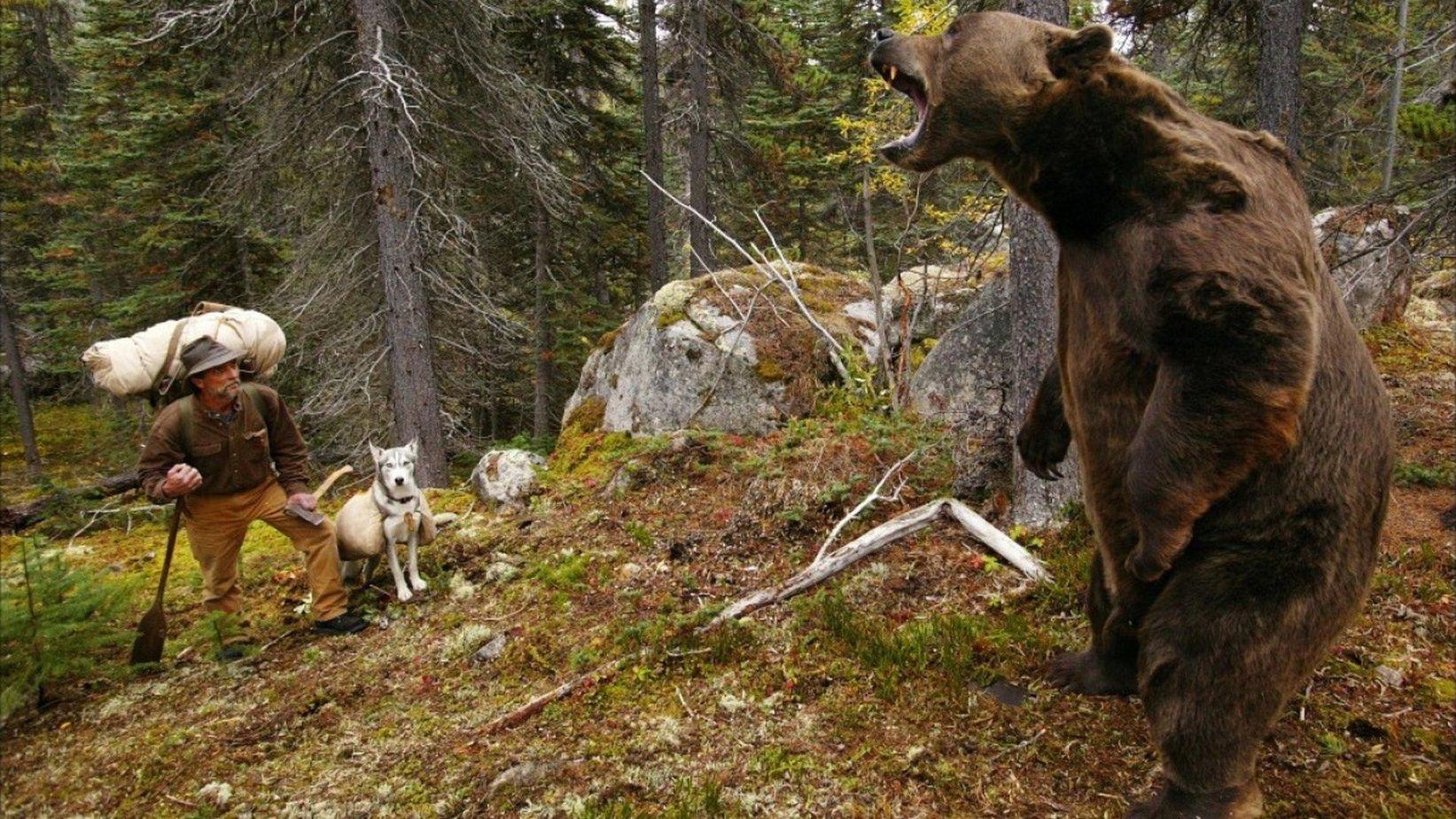 человек смотрит на медведя картинки тоска гомельчан собственной