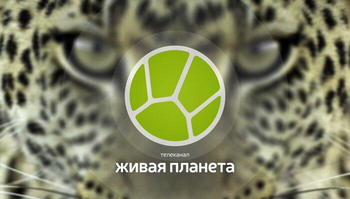 Россияне предпочитают отечественный телеконтент