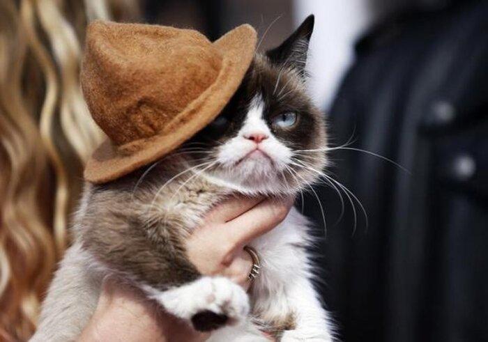 Угрюмая кошка заблистала на Бродвее: Фото