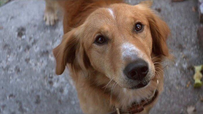 Голливудские звёзды шокированы издевательством над собакой на съёмках. Видео