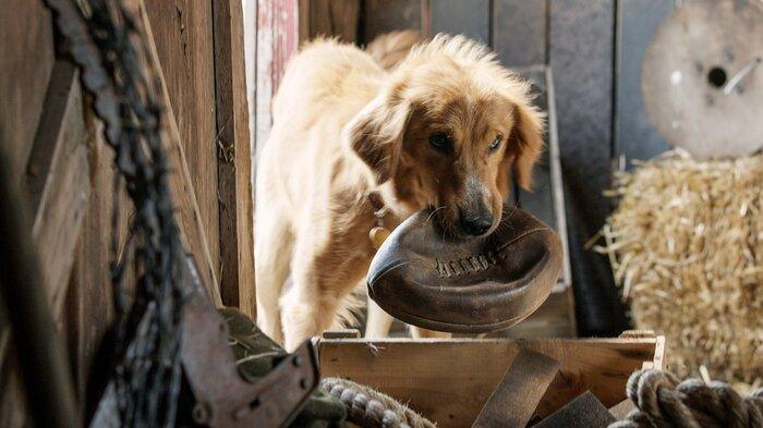 Голливудскому фильму объявили бойкот из-за жестокого обращения с животными на съёмках
