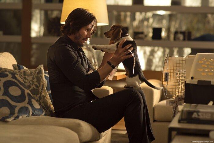 «Джон Уик» наоборот: в пародийном трейлере собака мстит за хозяина