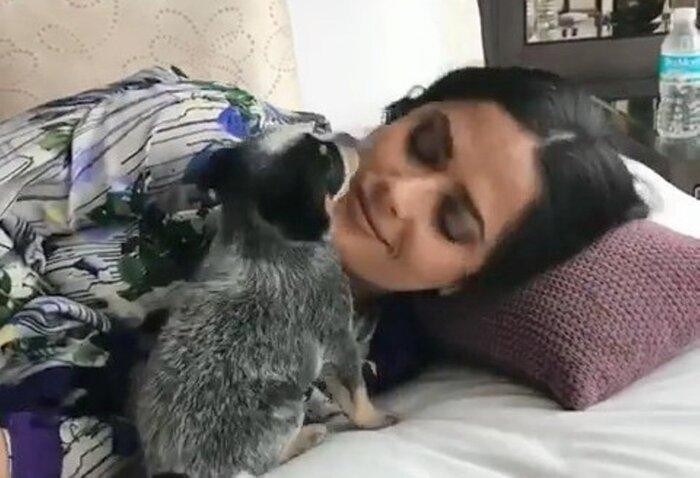 Фото дня: щенок Сальмы Хайек вызвал восторг у фанатов актрисы