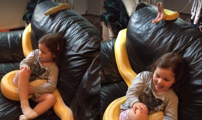 12-метровая змея смотрит ТВ вместе с девочкой: видео стало хитом