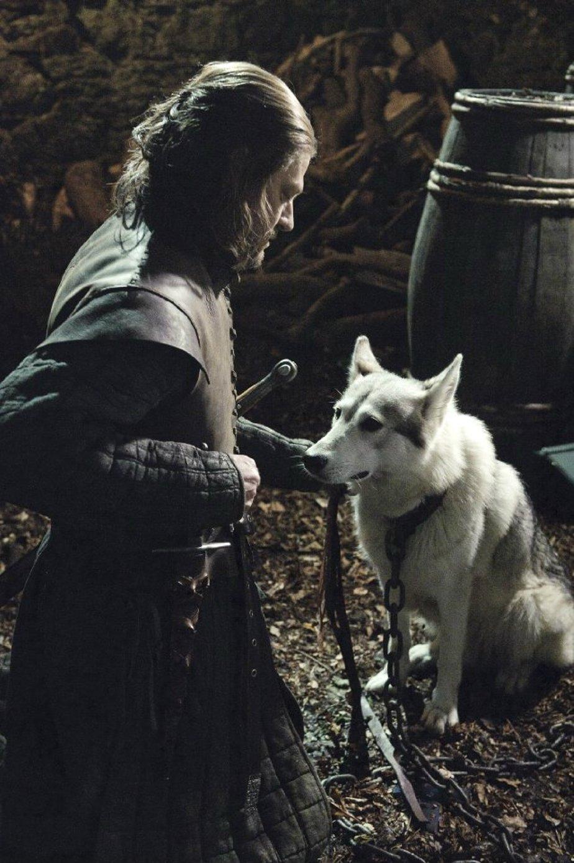 собаки з гри престолів проводим
