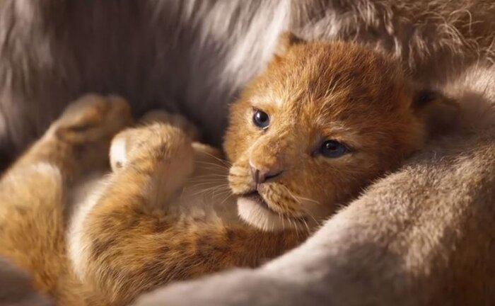 Касса России: никто не смог устоять в поединке с фильмом «Король лев» (29.07.2019)