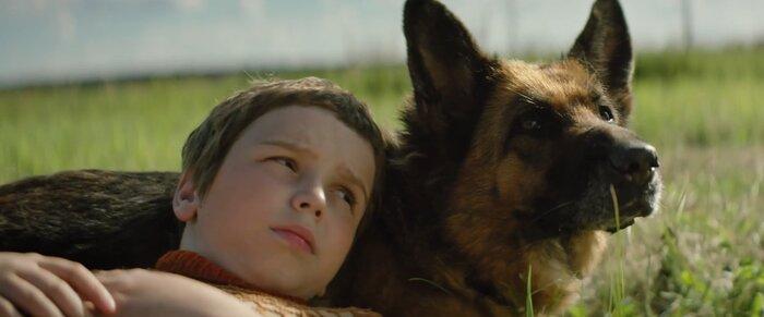 Фильмы про животных, после просмотра которых вы точно захотите завести питомца